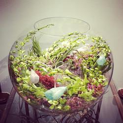 Kompozicija akvariume