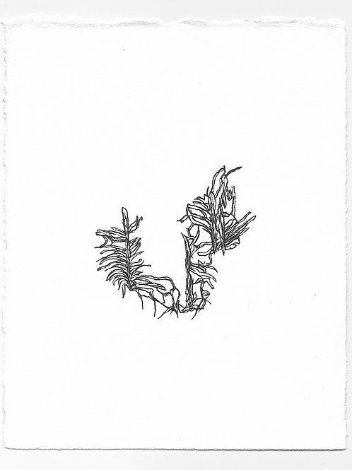 """Imitation"" Relief Print, Variation 2"
