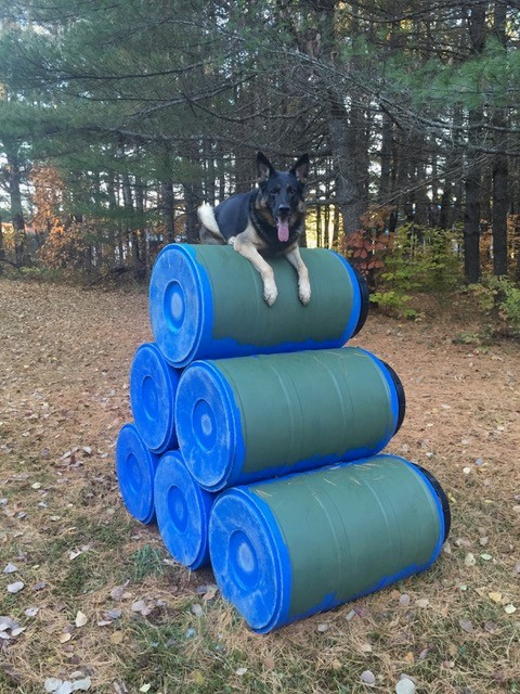 K9 Justice on the Agility Course