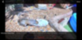 animal camera in Garden.JPG
