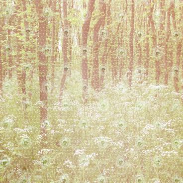 friendly-forest.jpg