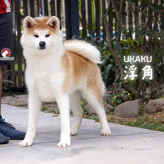 Ukaku Go Hakufumy