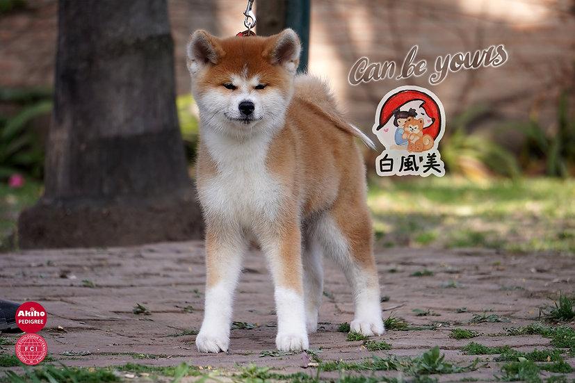 Zaihu Go Hakufumy