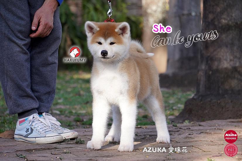 Azuka Go Hakufumy
