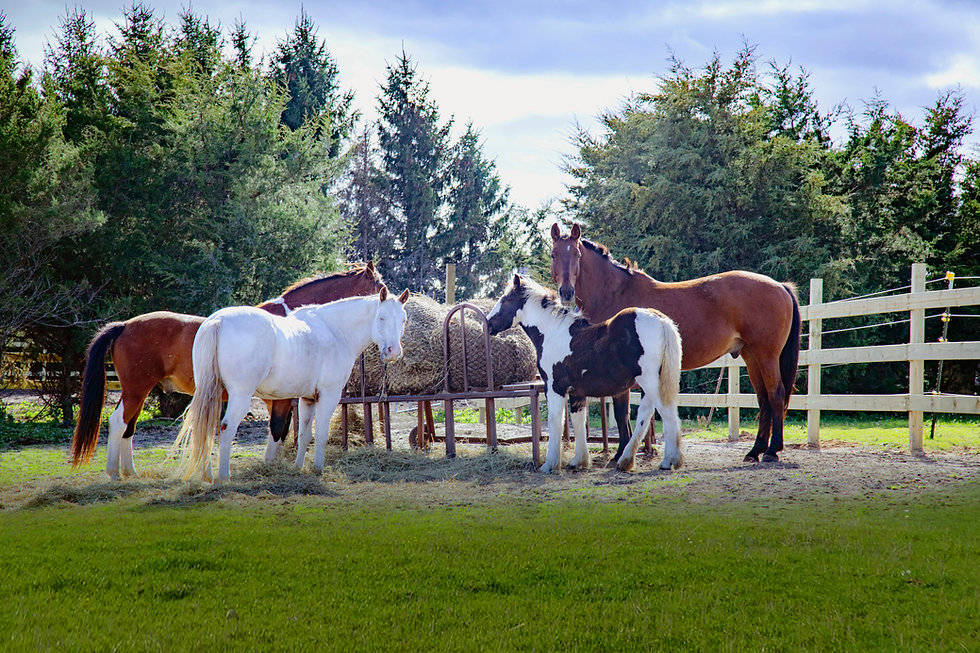 HorsesHay.jpg