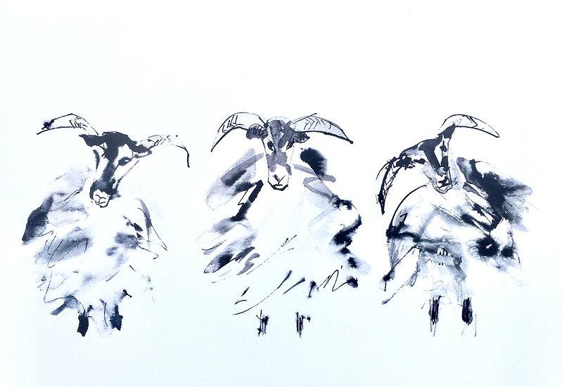 Three Torridon Sheep (from Annat)