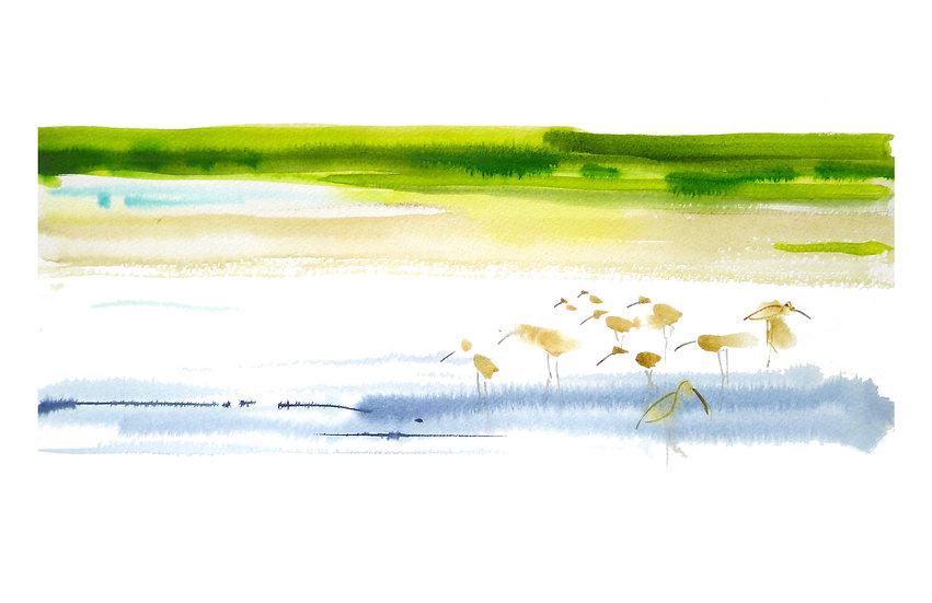 Curlews on Annat beach