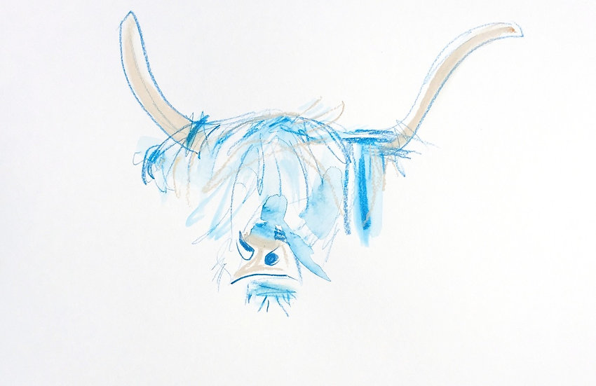 HIghland Cow in Blue and Stone