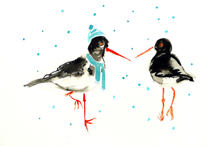 Oyster Catcher Christmas Card