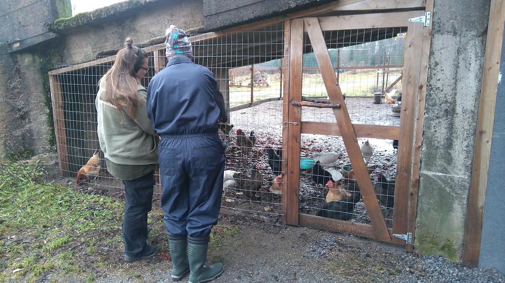 Harjoittelijat Liviasta ja HAMK:sta keskustelevat kanojen hoidosta.