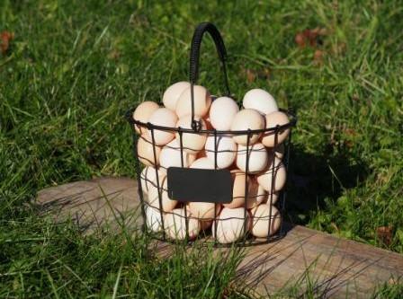 Nouda munia Niinan Puodilta