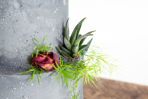 Close up of Succulent & Dried Rose Display