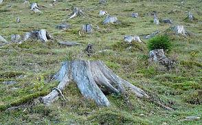 deforestation-62486_1920.jpg