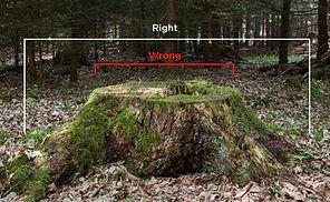 Stump Measuring Guide.jpg