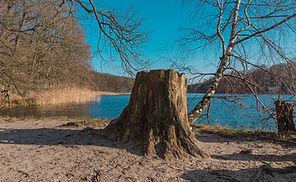 nature-3100733_1920.jpg