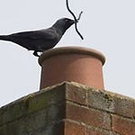 Portsmouth chimney sweep