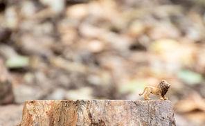 animal-big-cat-blur-1319575.jpg