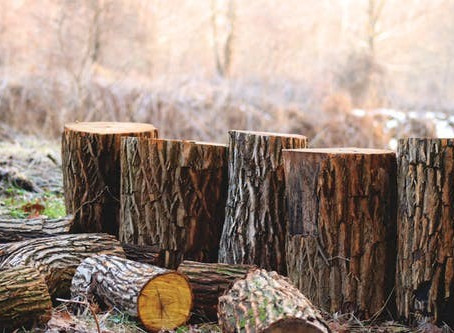 Season well: is your firewood giving you a tar problem?