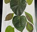 leaf collage.JPG