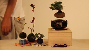 Floating Bonsai