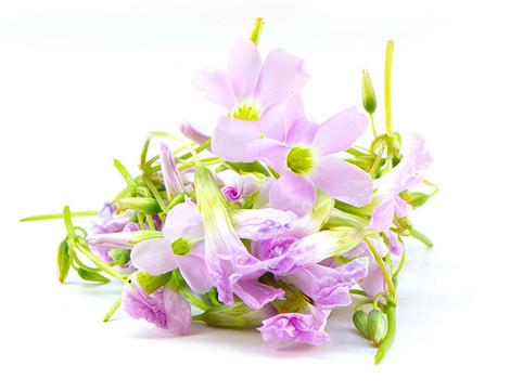 פרחי-אוקסליס