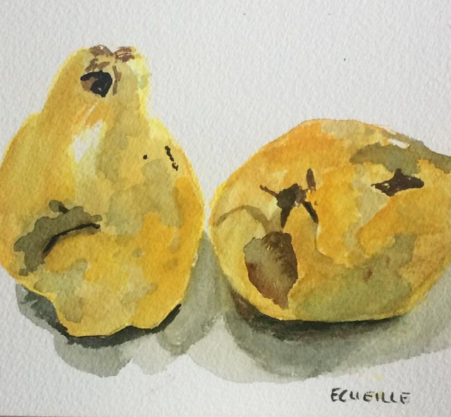 Fruits d'automne - Coings