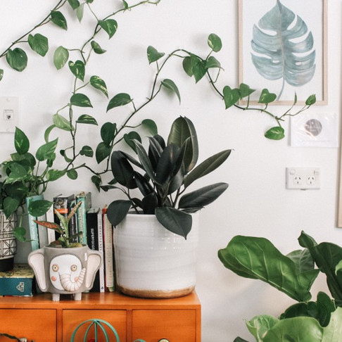 5 Easy Plants That Will Purify Your Home'sAir