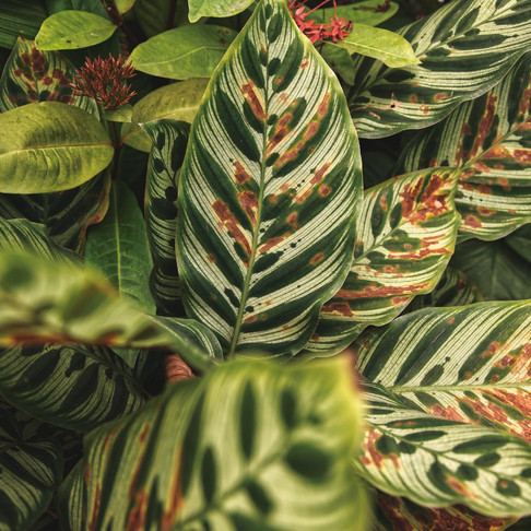 This is Why Your Plants Keep Dying