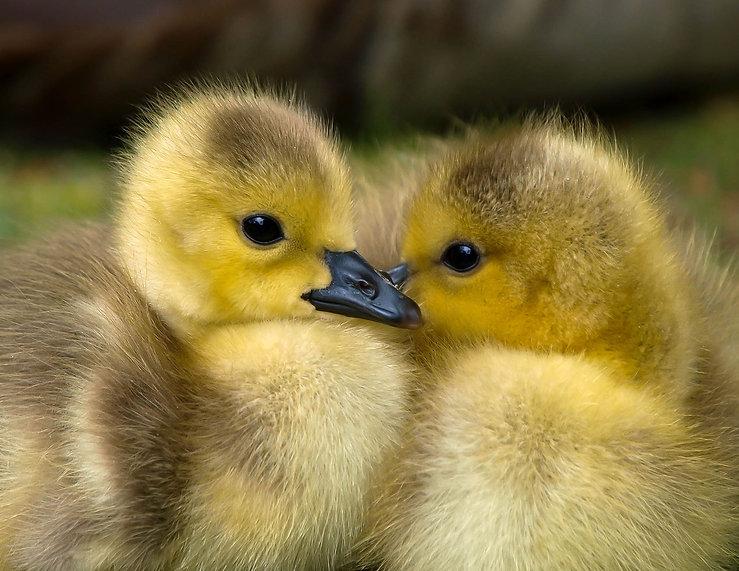 animal-baby-beak-157465.jpg