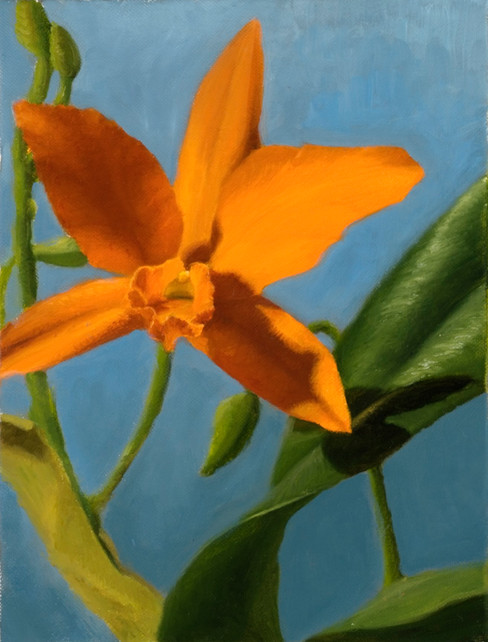 orange orchid.jpg
