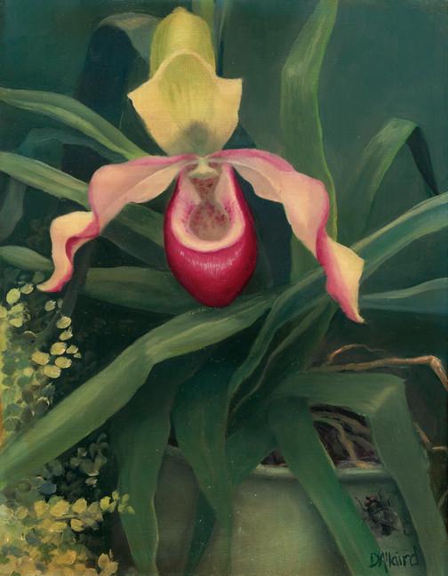 Karen D Orchid.jpg