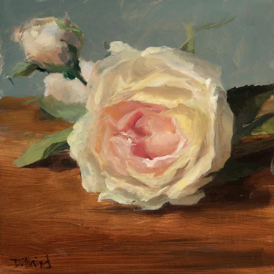 Karen D Single rose.jpg