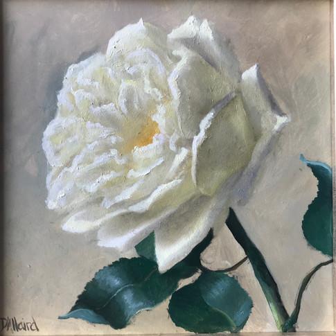 Carole's Rose.jpg