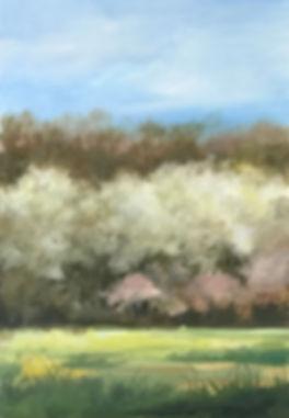 Tree Line in Bloom.jpg