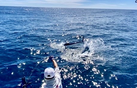 Pisces Cabo Fishing Report Jan 30th to Feb 5th