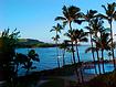 Norman Whaler Gallery Hawaii Palm Trees normanwhaler.com