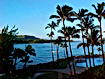 Norman Whaler Gallery Hawaii Palm Trees normanwhaler.com