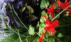 Norman Whaler Gallery Flowers 1 normanwhaler.com