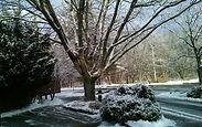Norman Whaler Gallery Winter Scene 1