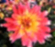 Norman Whaler Gallery Pink Flower normanwhaler.com