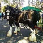 Norman Whaler Gallery Horse 1 normanwhaler.com