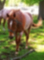 Norman Whaler Gallery Horse 2 normanwhaler.com