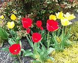 Norman Whaler Gallery Tulips 1 normanwhaler.com