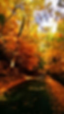 Norman Whaler Gallery Fall Leaves normanwhaler.com