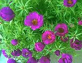 Norman Whaler Gallery Flowers 176 normanwhaler.com