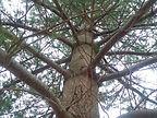 Norman Whaler Gallery_Tree.jpg