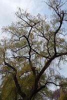 Norman Whaler Gallery Tree 175 normanwhaler.com