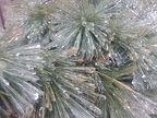 Norman Whaler Gallery _ Ice Needles.jpg