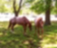 Norman Whaler Gallery Horse 3 normanwhaler.com
