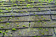 Roof_Cleaning_Moss_Lychen.jpg